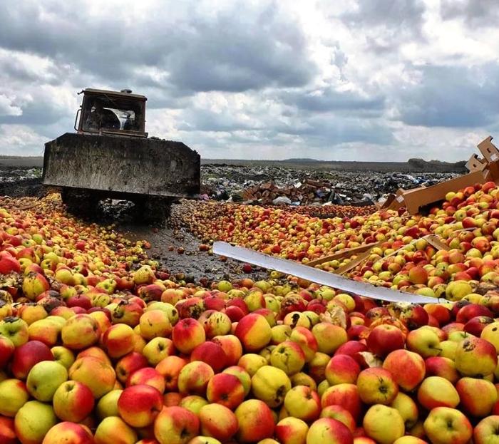 Почти 1,7 тонн яблок и груш из Польши изъял в «новой Москве»