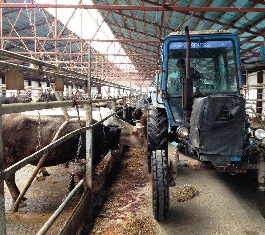 Реконструкцию сельхозфермы в ТиНАО планируется завершить в 2019 году