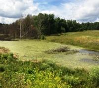 ОНФ установил факт уничтожения природного объекта в районе Марьинского ручья