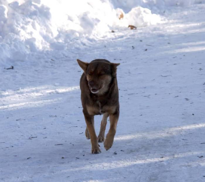 Карантин по бешенству животных объявлен в поселении Вороновское в ТиНАО до 16 мая
