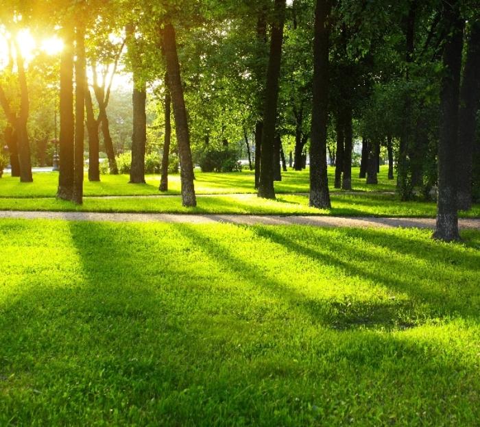 Парк площадью около 100 га появится в ТиНАО к 2023 году
