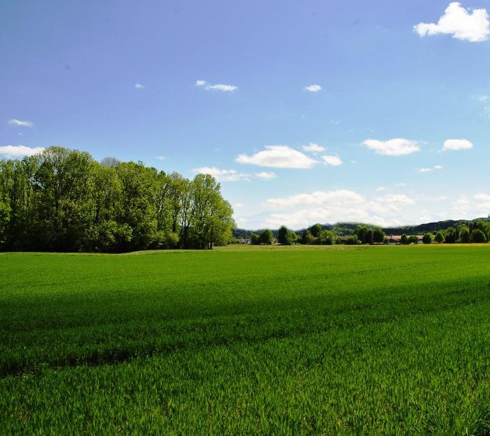 Столичные власти выставят на торги три земельных участка в ТиНАО