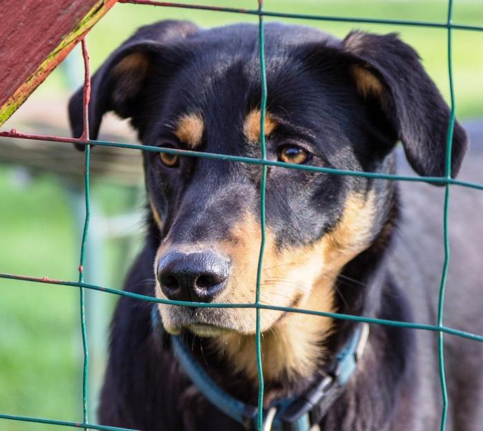 Приют для бездомных животных построят в ТиНАО