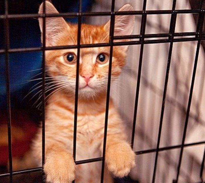 В ТиНАО зоозащитники хотят создать первый в России отдельный приют для кошек