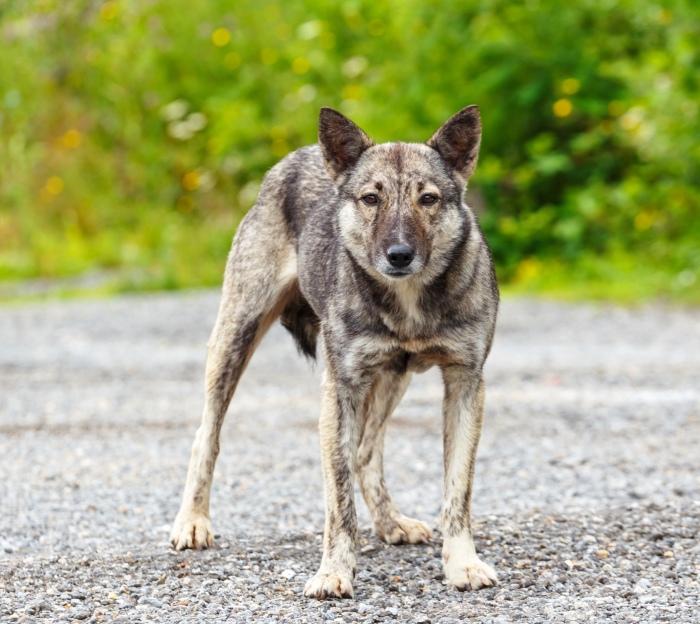 Карантин по бешенству животных объявлен в поселении Краснопахорское до 13 июня