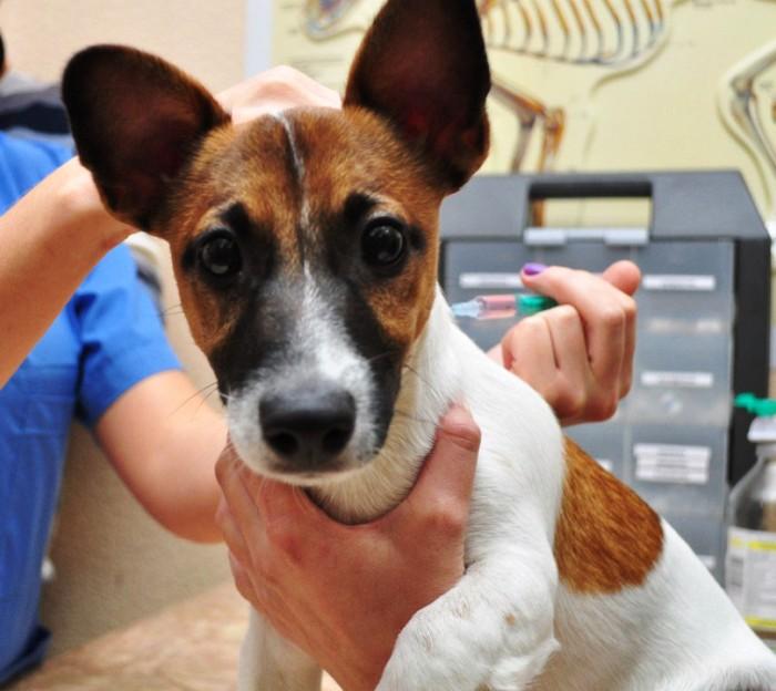 Бесплатную вакцинацию домашних животных проведут в поселении Михайлово-Ярцевское 7 июля