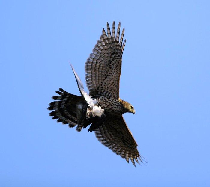 Ужа, двух ястребов и еще более 20 птиц выпустили в дикую природу в «новой Москве»