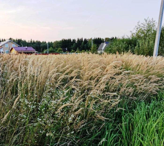 Четыре земельных участка в «новой Москве» под строительство индивидуального жилья выставлено на торги