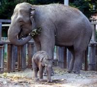 Филиал Московского зоопарка может появиться в «новой Москве»